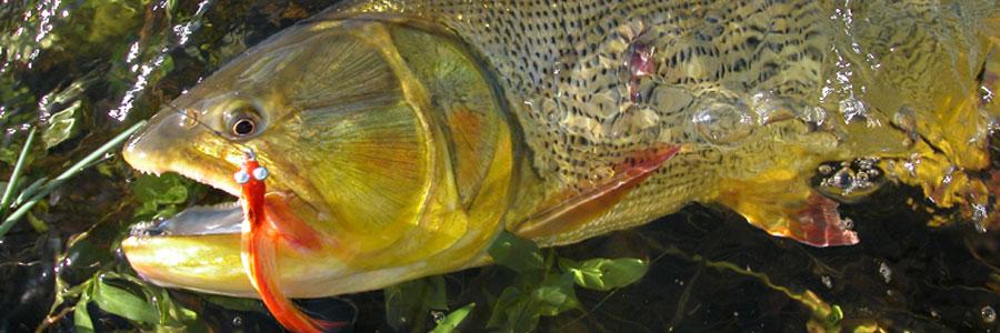 Fly fishing hunting adventures dorado fishing parana for Parana the fish